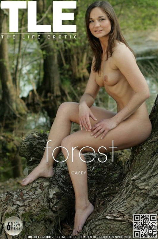 Casey - Forest (x241)